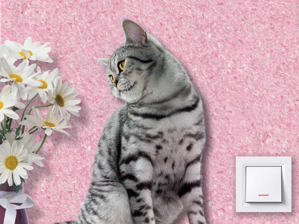Ремонтируем поврежденные кошками жидкие обои